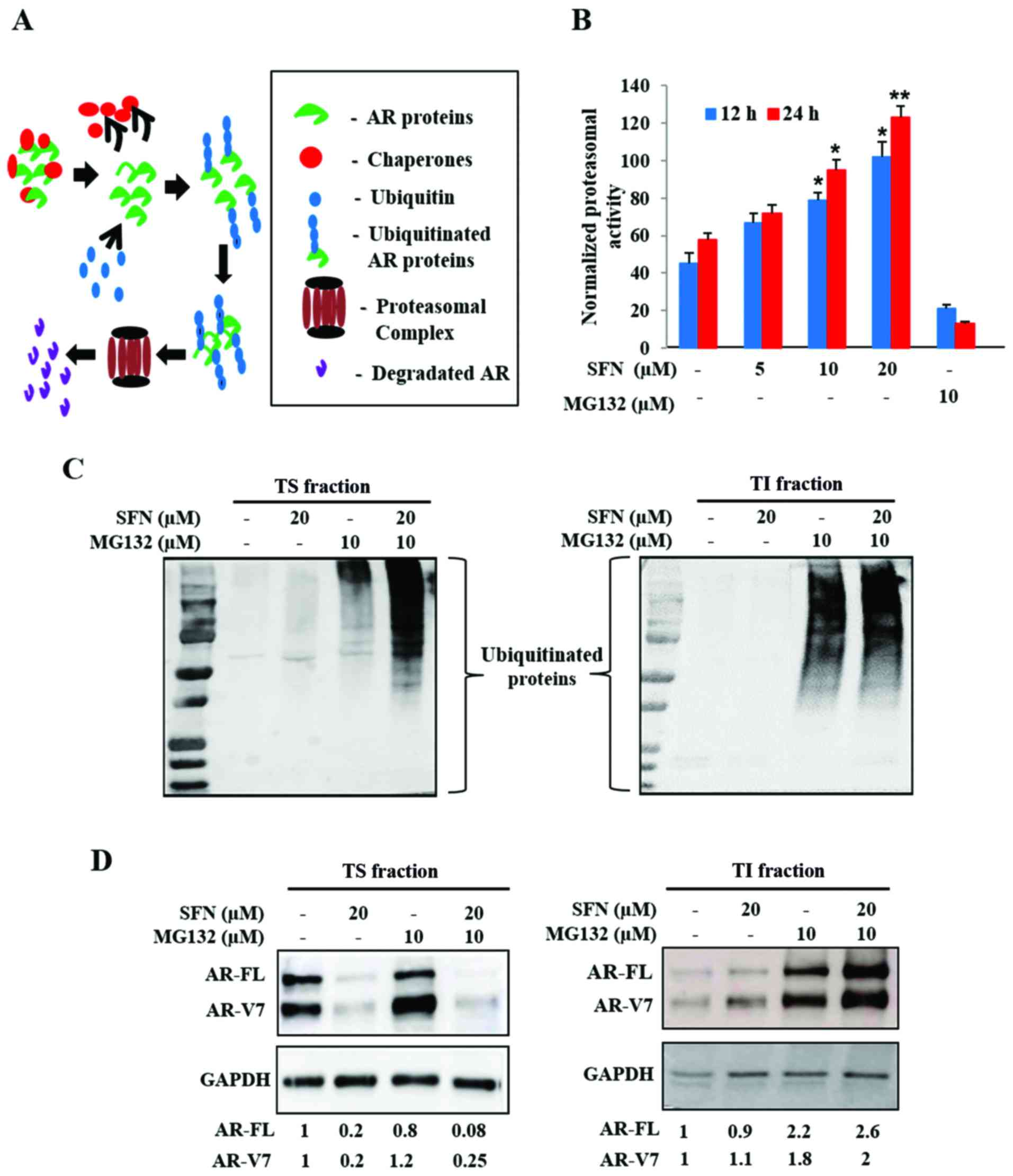 Multimodal actions of the phytochemical sulforaphane suppress both