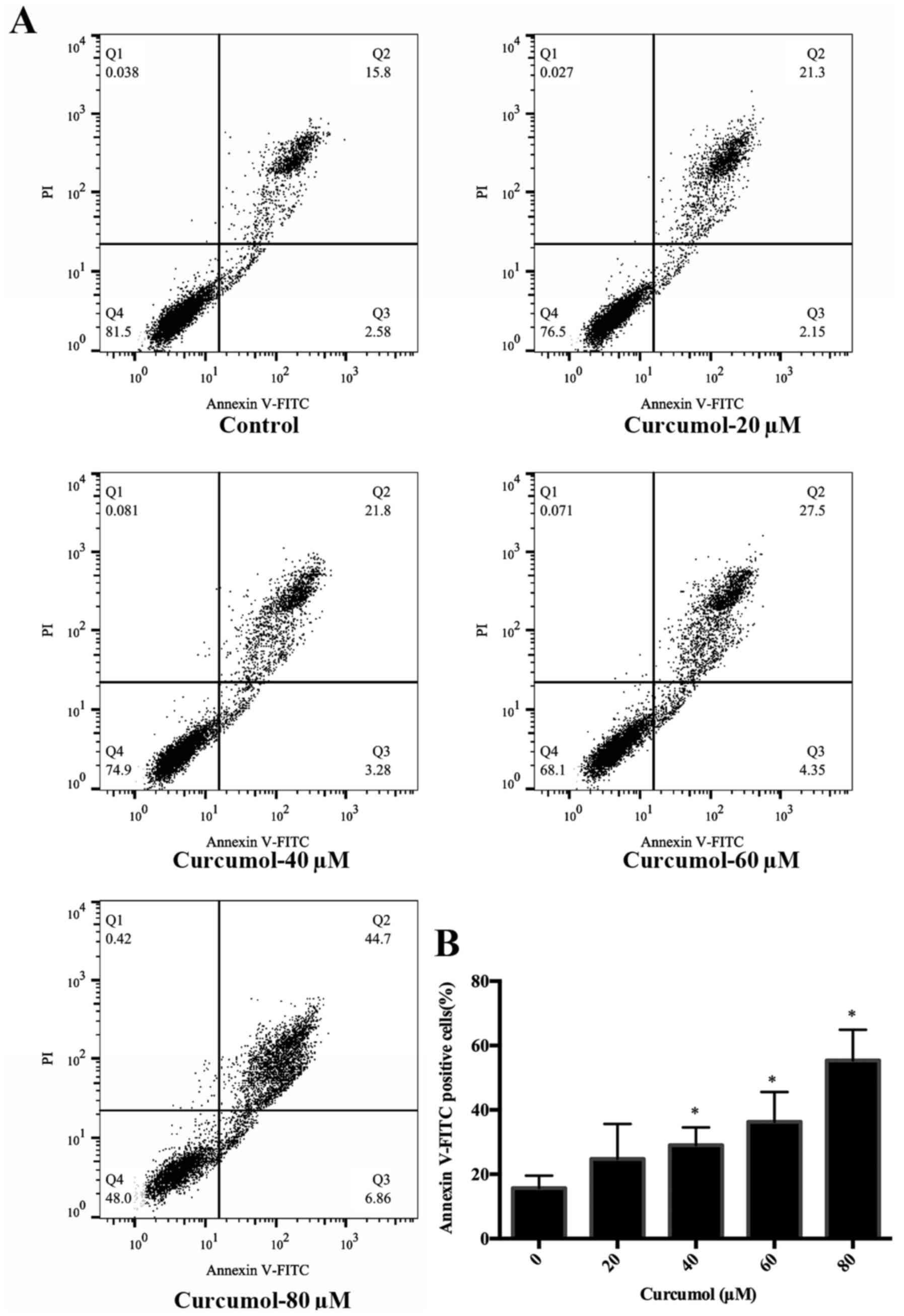 Proliferation Of Gastric Adenocarcinoma