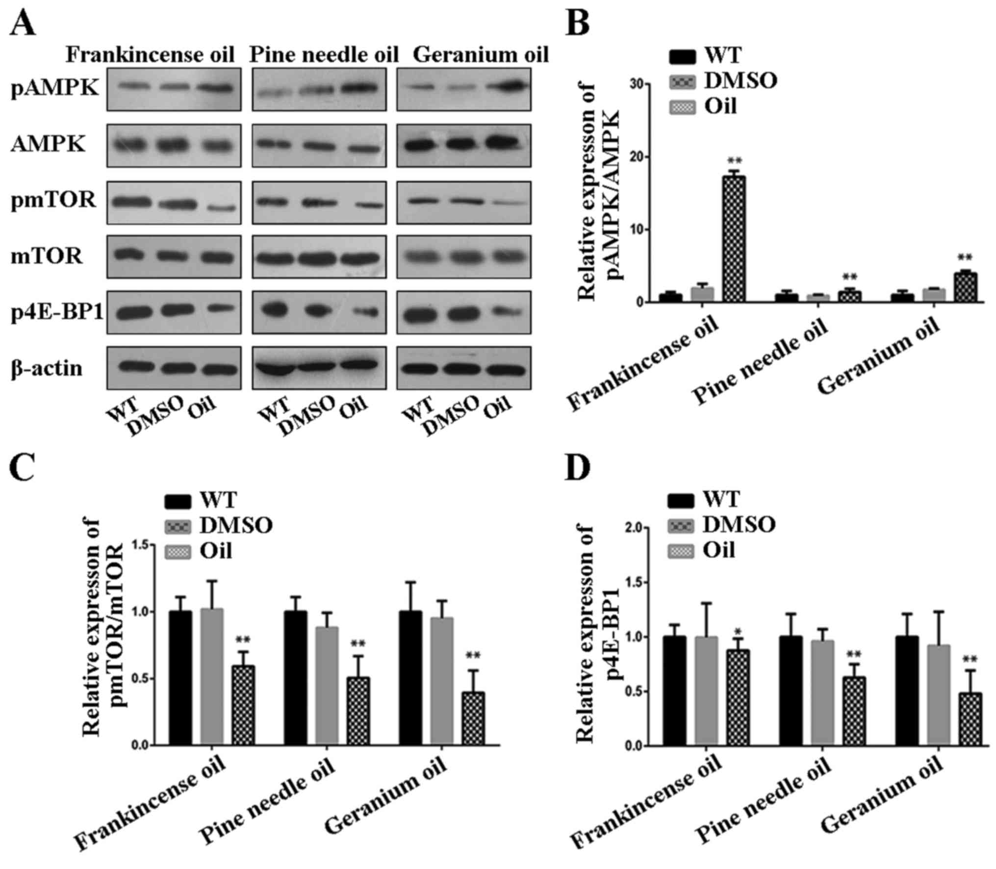 Frankincense Pine Needle And Geranium Essential Oils Suppress Tumor Progression Through The Regulation Of The Ampk Mtor Pathway In Breast Cancer