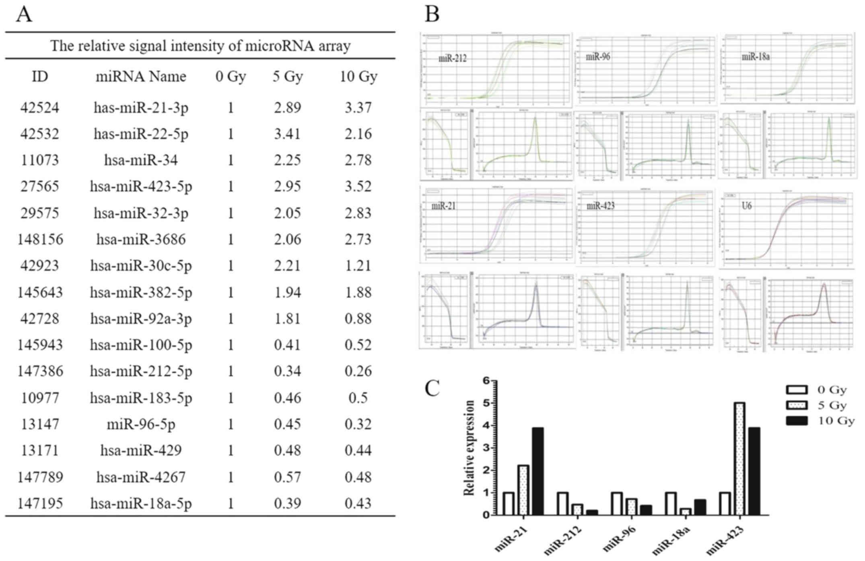 hsa-miR-212 modulates the radiosensitivity of glioma cells by