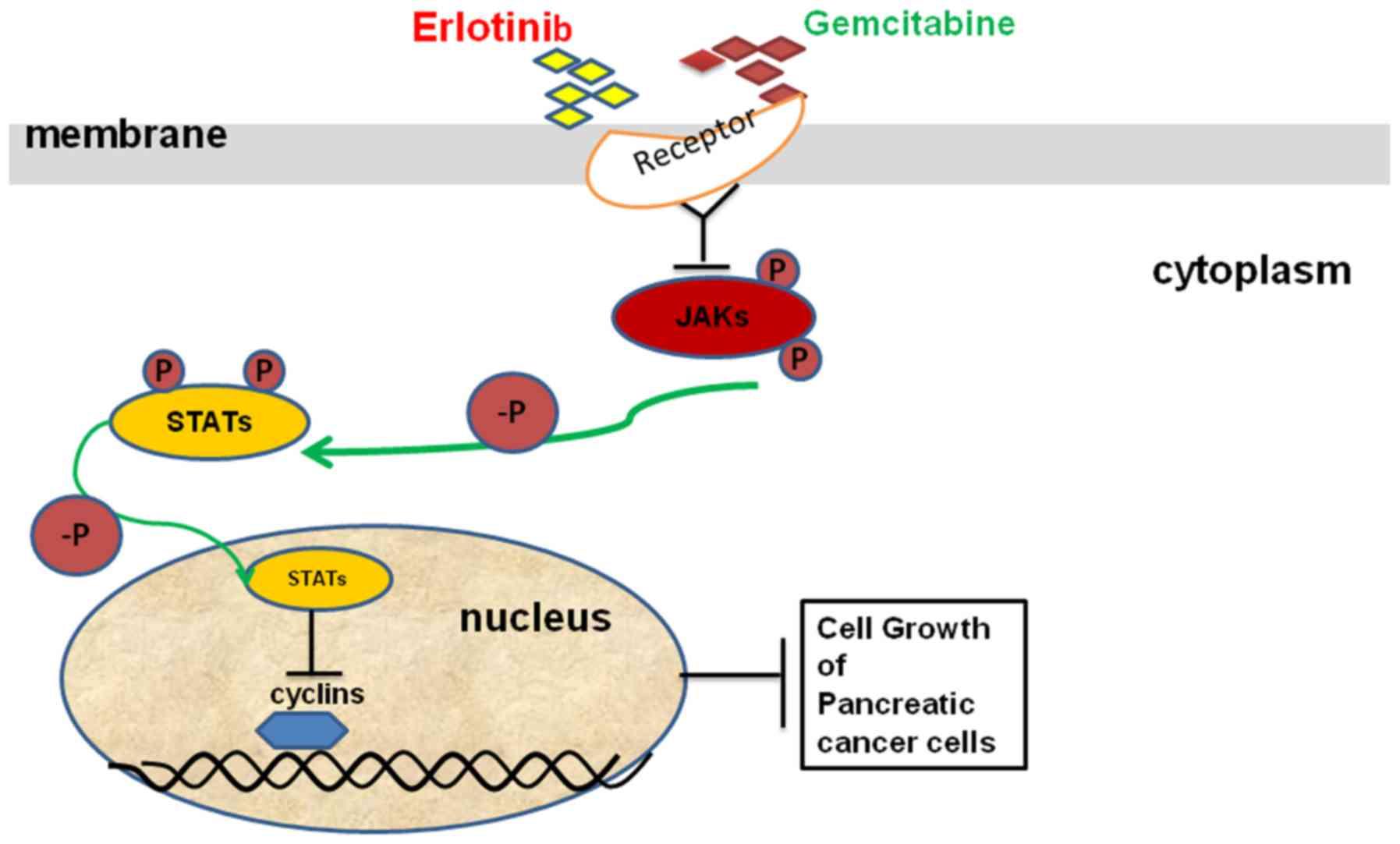 pancreatic cancer erlotinib)