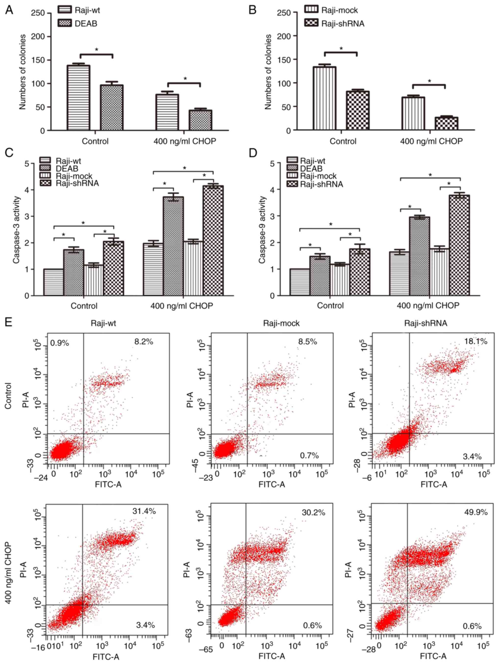 the role of aldehyde dehydrogenase 1a1 in b cell non hodgkins lymphoma