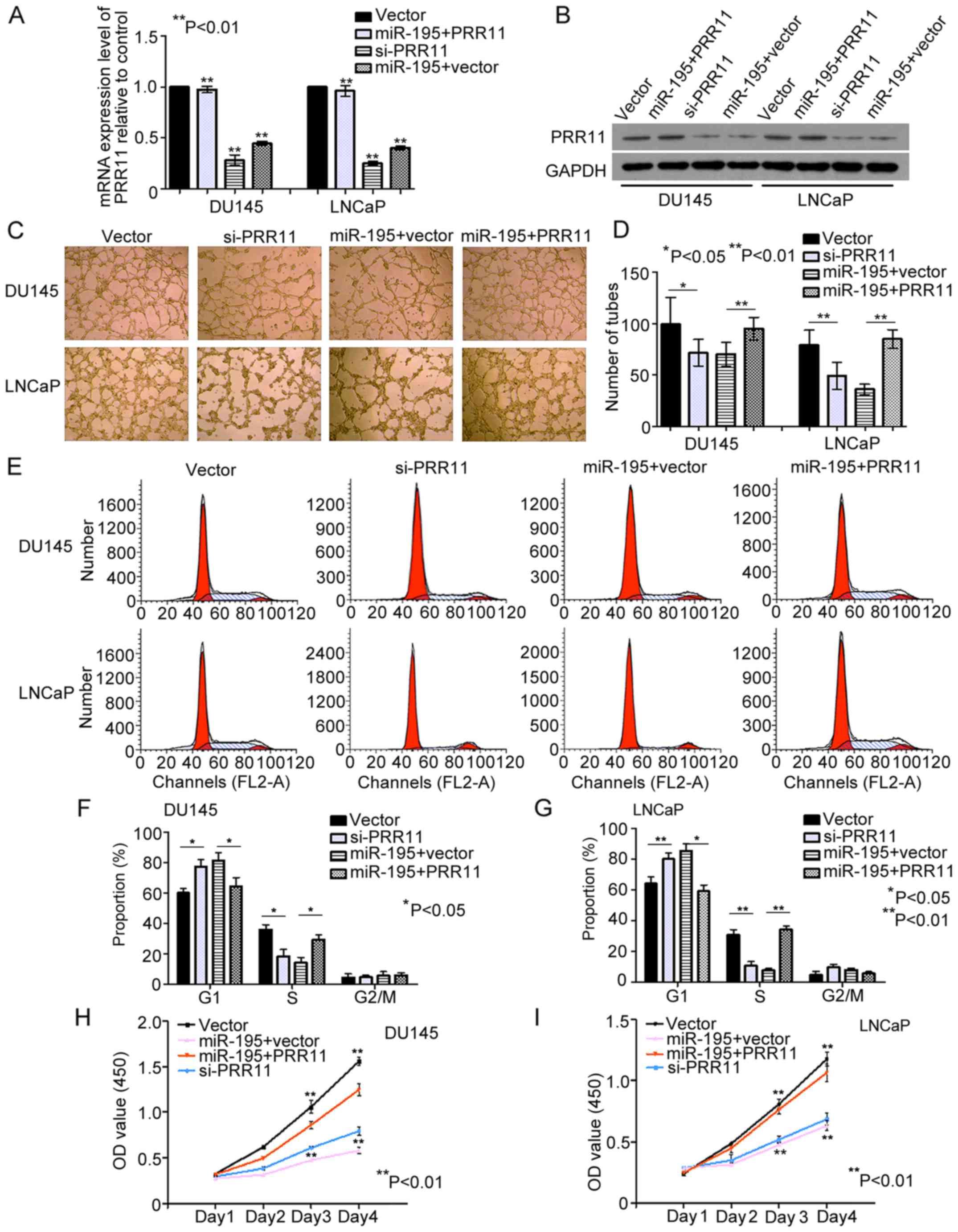 hsa-miR-195-5p inhibits cell proliferation of human