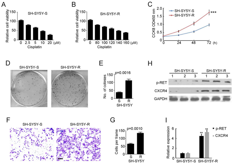 Vandetanib inhibits cisplatin‑resistant neuroblastoma tumor growth