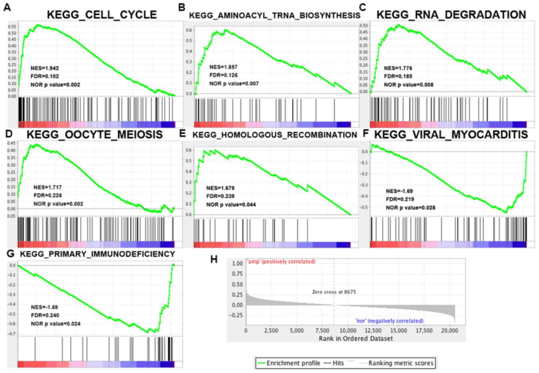 Knockdown of tyrosine 3-monooxygenase/tryptophan 5