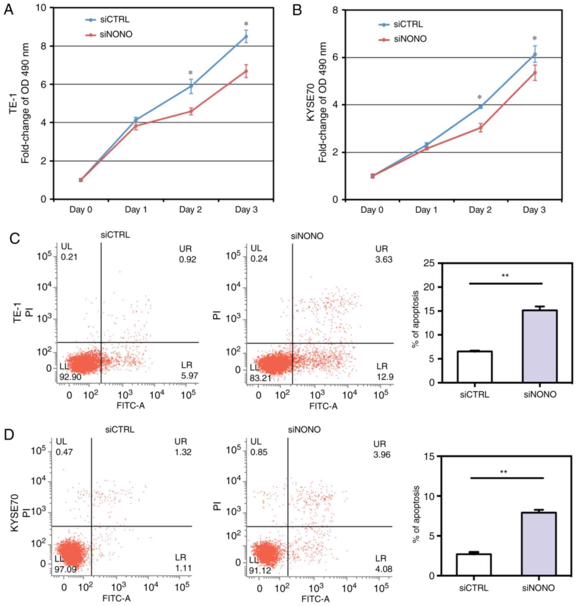Downregulation Of Nono Induces Apoptosis Suppressing Growth And Clifford Matrix 1 Wiring Diagram A B Mts Assay Showed That Knockdown Inhibited Proliferation In Te Kyse70 Escc Cell Lines C D Apoptotic Death Was Determined By