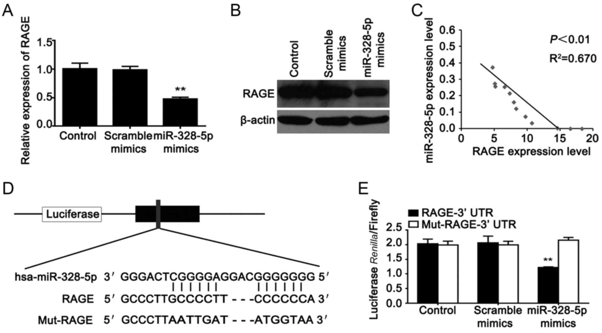 Mir 328 5p Inhibits Mda Mb 231 Breast Cancer Cell Proliferation By Kc 135 Engineering Schematics C The Relativity Rate Of And Rage In 13 Tissues D Predicted Binding Site
