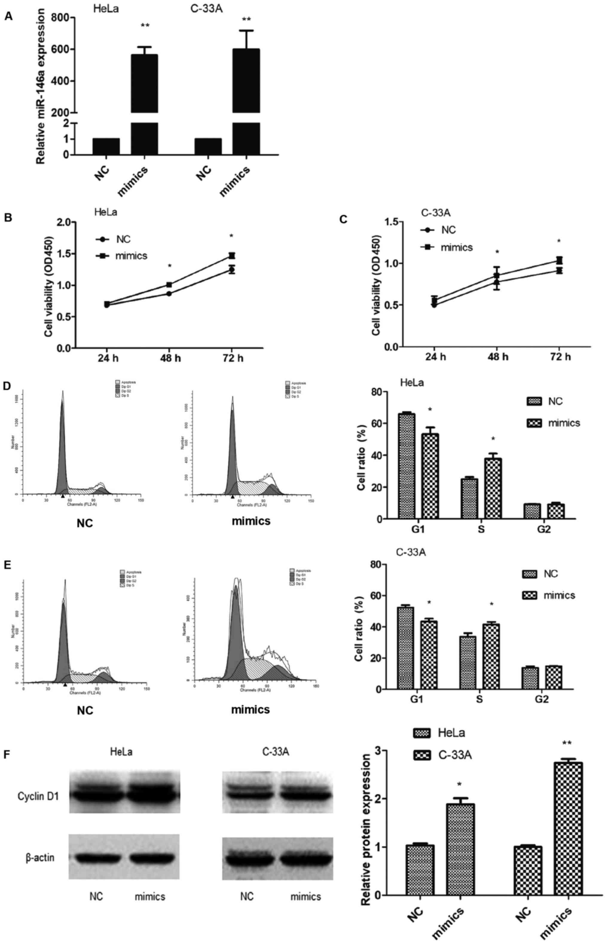 miR-146a promotes cervical cancer cell viability via