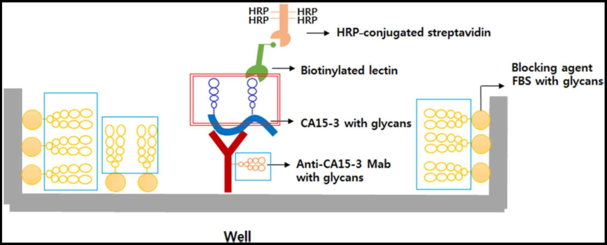 Use Of Ca153 For Screening Breast Cancer An Antibodylectin Pna L Block Diagram Schematic The Antibody Lectin Sandwich Assay Immobilized Anti Ca15 3 Captures In Serum And Glycosylation Is Detected