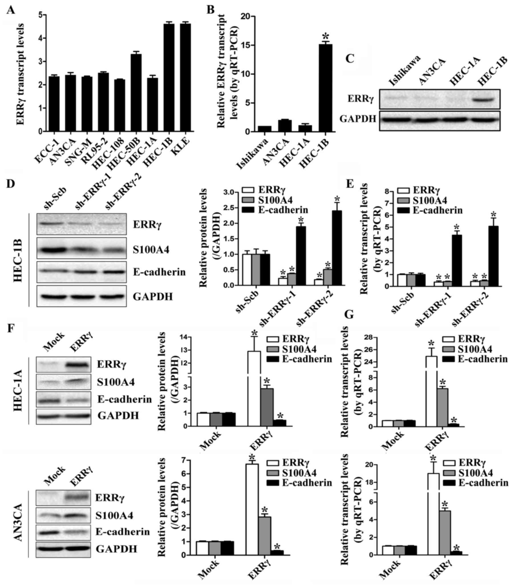 Estrogen‑related receptor γ promotes the migration and