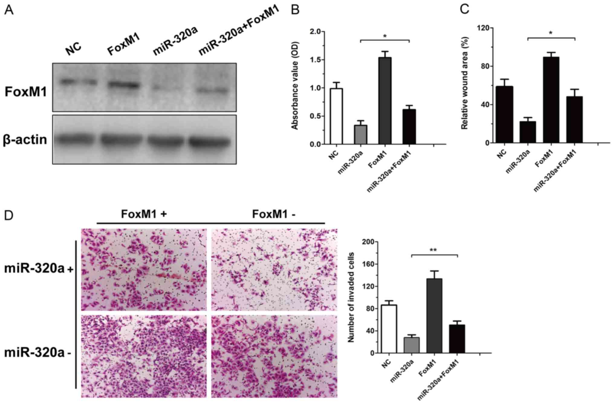 Gambar terkait untuk pdf overexpression of forkhead box l foxl inhibits the proliferation and invasion of breast cancer cells