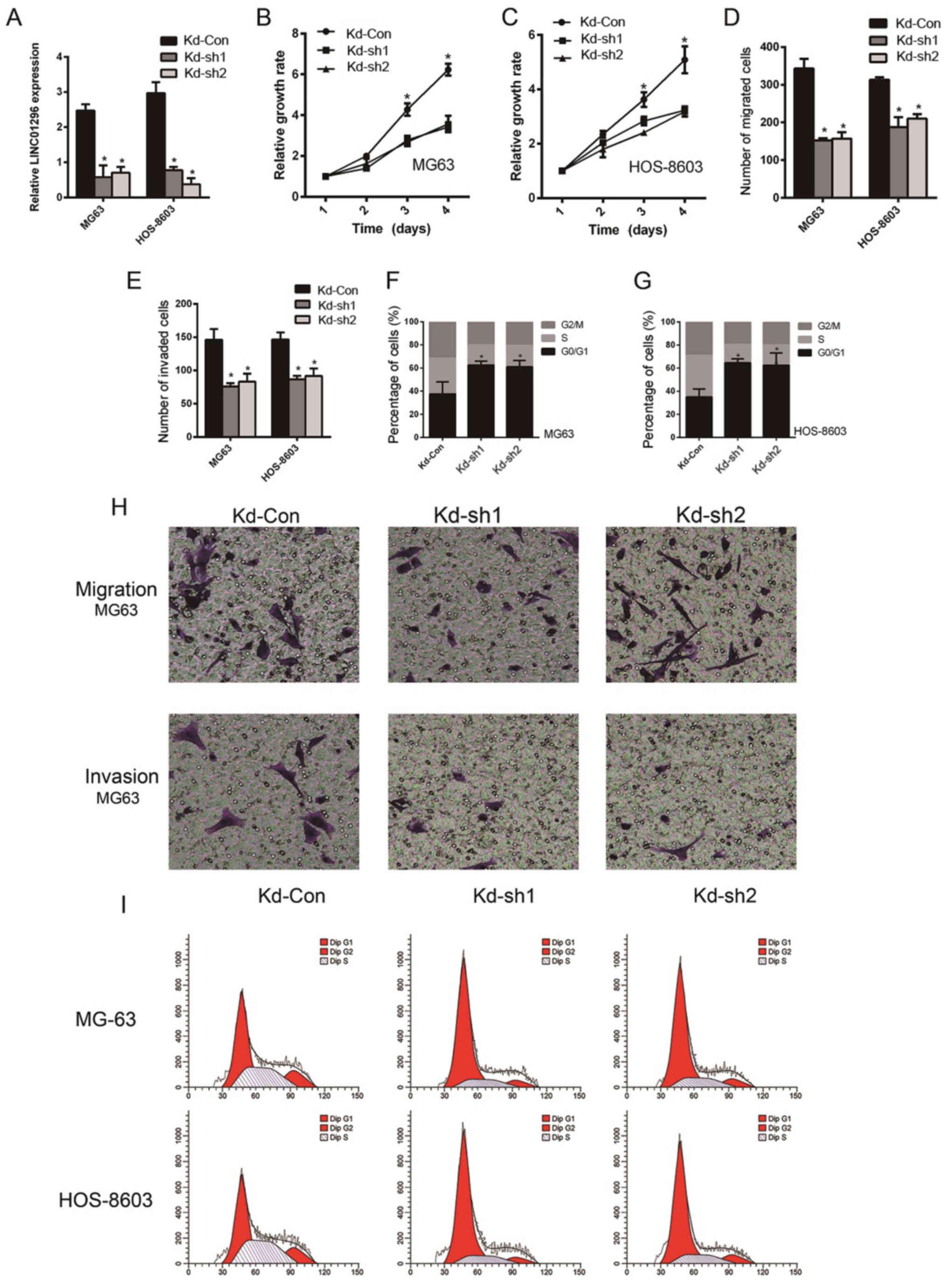 lncRNA LINC01296 regulates the proliferation, metastasis and
