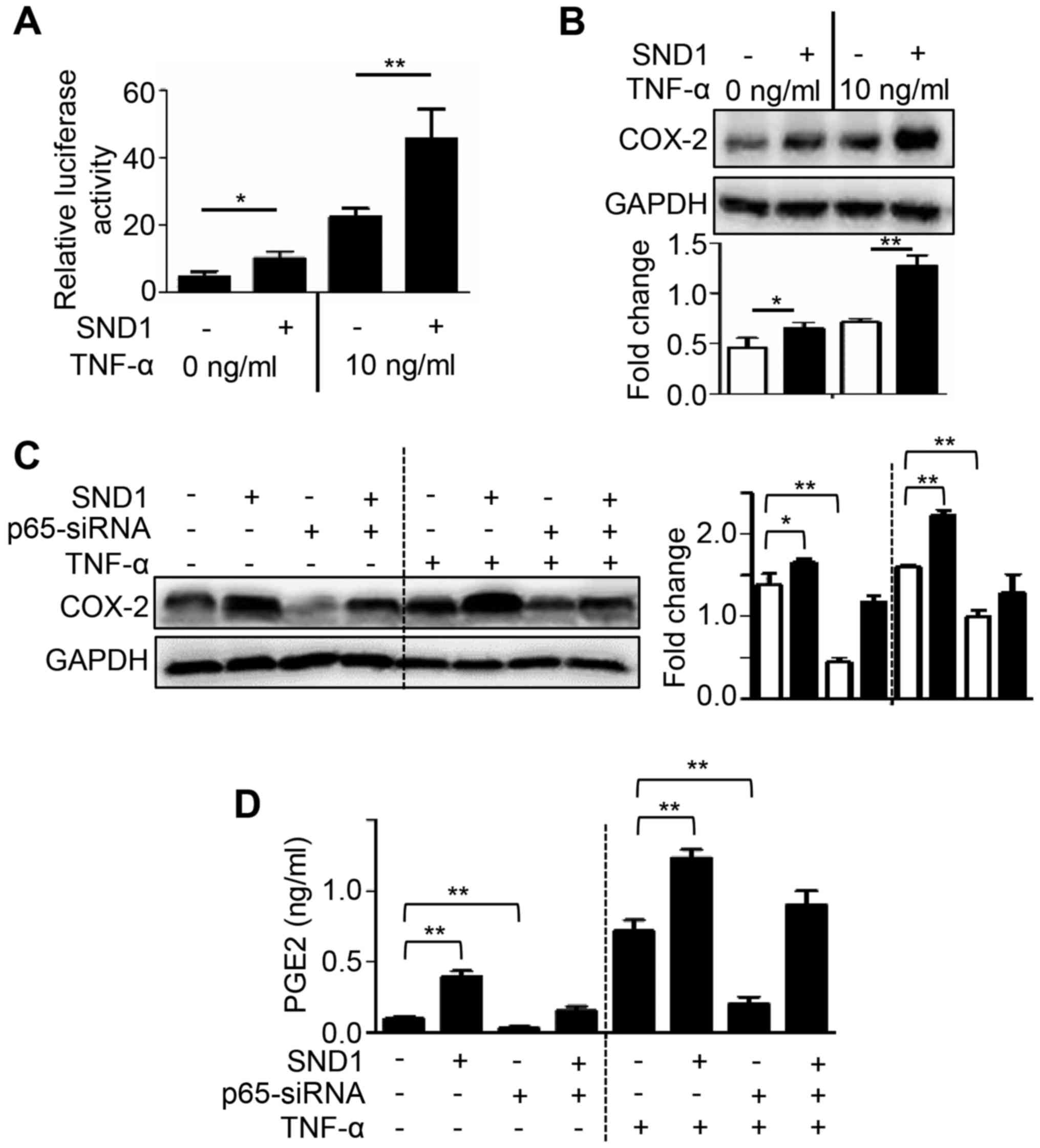 SND1 promotes the proliferation of osteosarcoma cells by