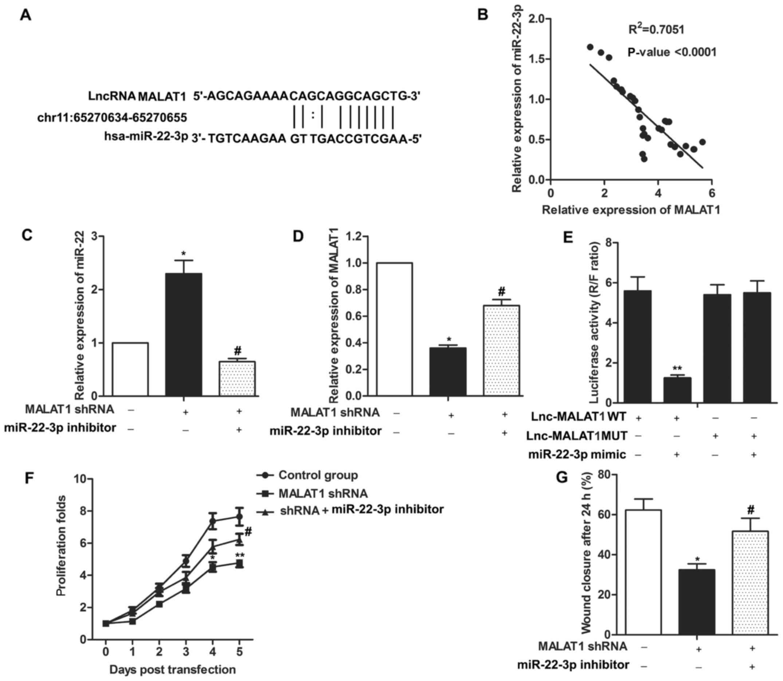 Long non‑coding RNA MALAT1 correlates with cell viability