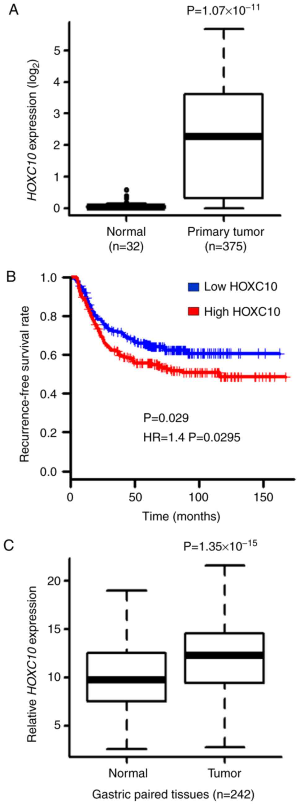 HOXC10 overexpression promotes cell proliferation and
