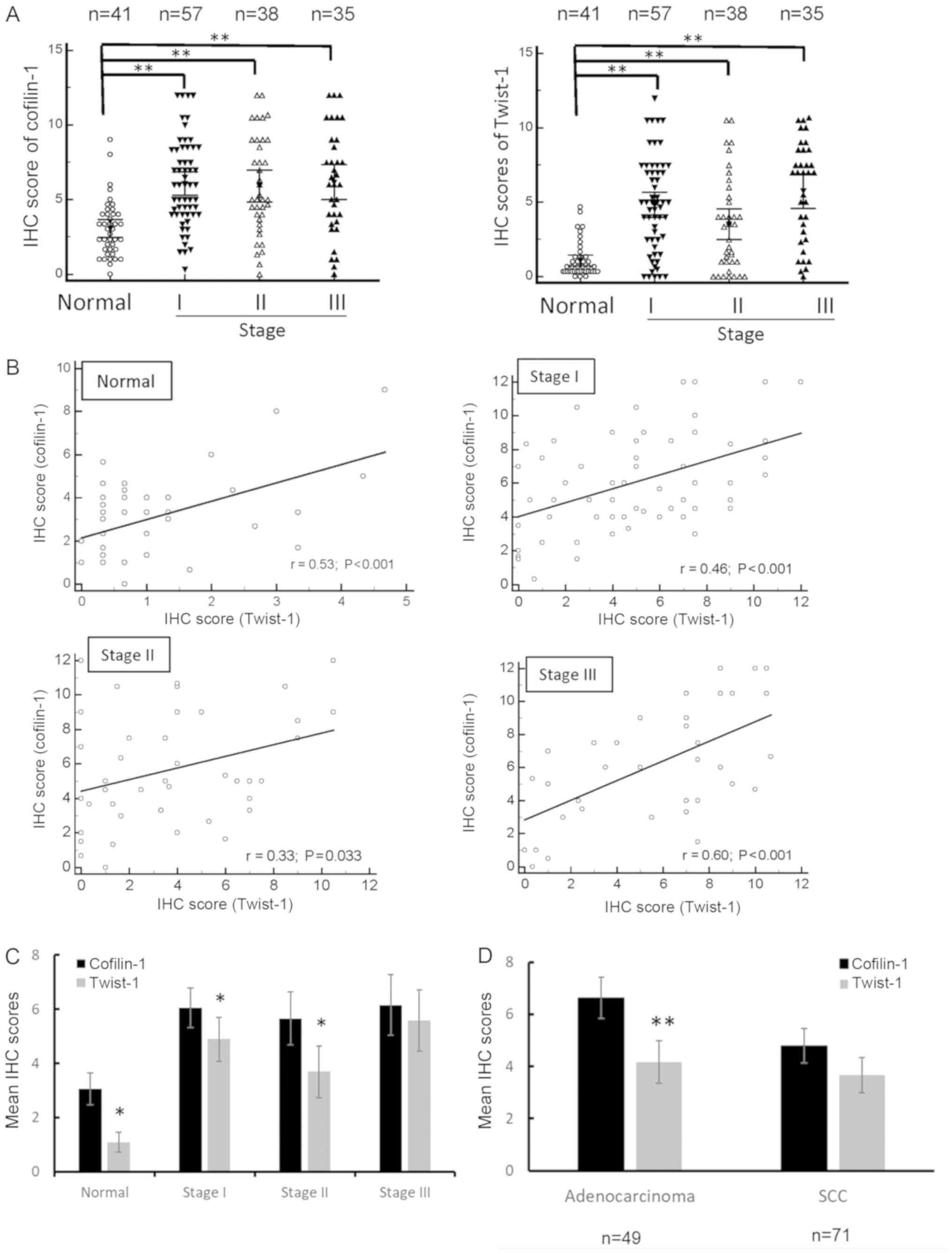 Comparison Of Cofilin 1 And Twist 1 Protein Expression In Human Non Small Cell Lung Cancer Tissues Twist.moe — all time overall report. small cell lung cancer tissues