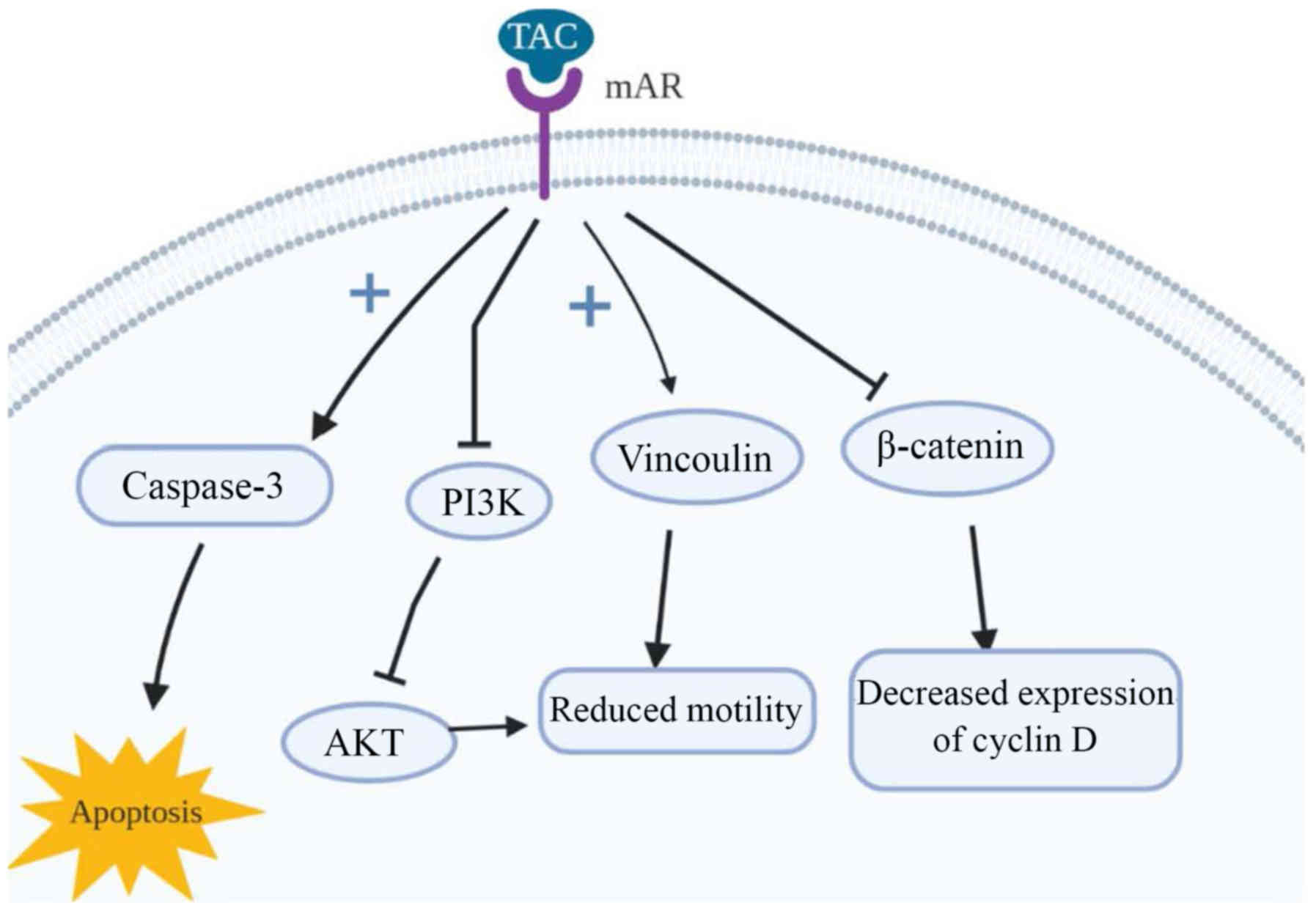Role Of Anabolic Agents In Colorectal Carcinogenesis Myths And Realities Review