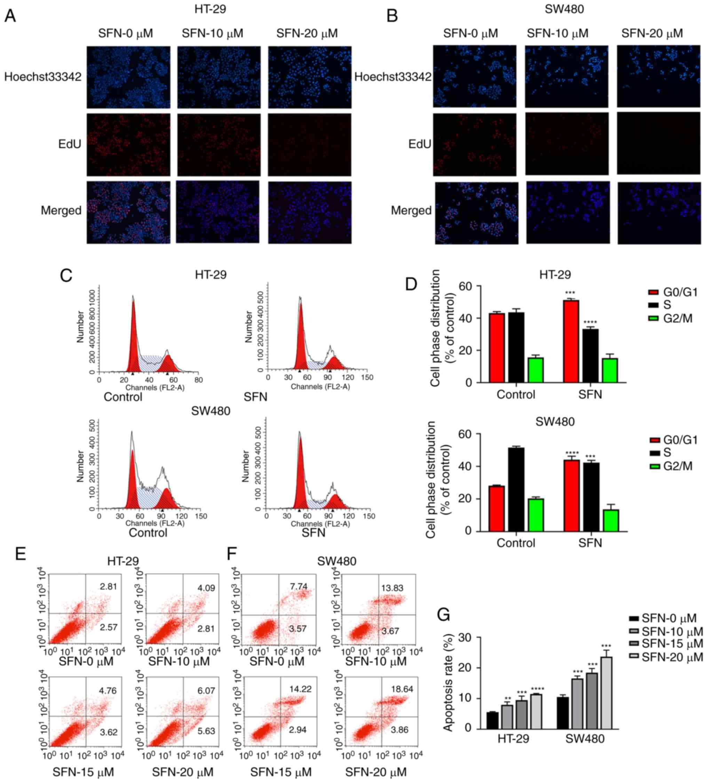 Sulforaphane Suppresses Carcinogenesis Of Colorectal Cancer Through The Erk Nrf2 Udp Glucuronosyltransferase 1a Metabolic Axis Activation
