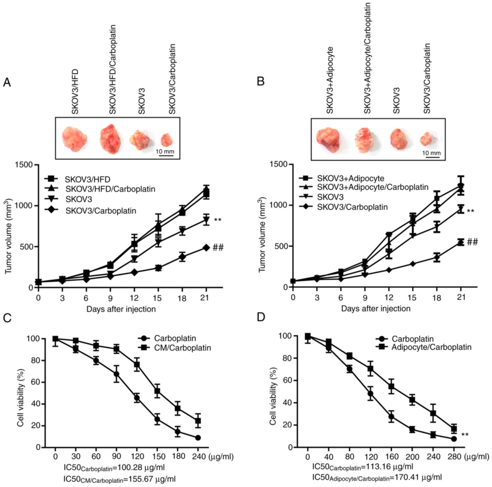 Adipocytes Induce The Resistance Of Ovarian Cancer To Carboplatin Through Angptl4