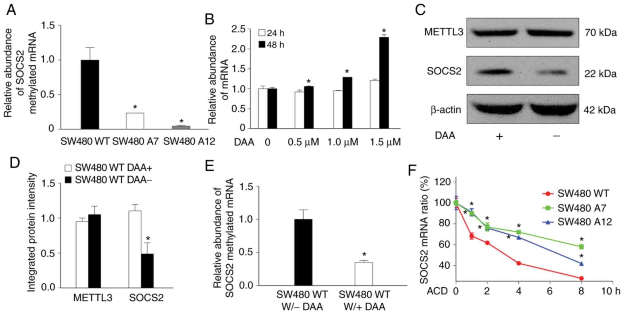 DNA methyltransferase 3, a target of microRNA-29c